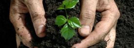 fertilizer-buying-guide_17490_600x450